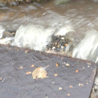 October 1st 2019 - Sewer Overflowing