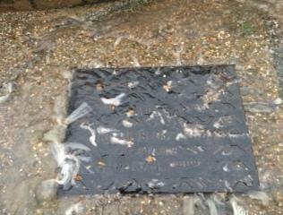 23.12.20 Sewage debris
